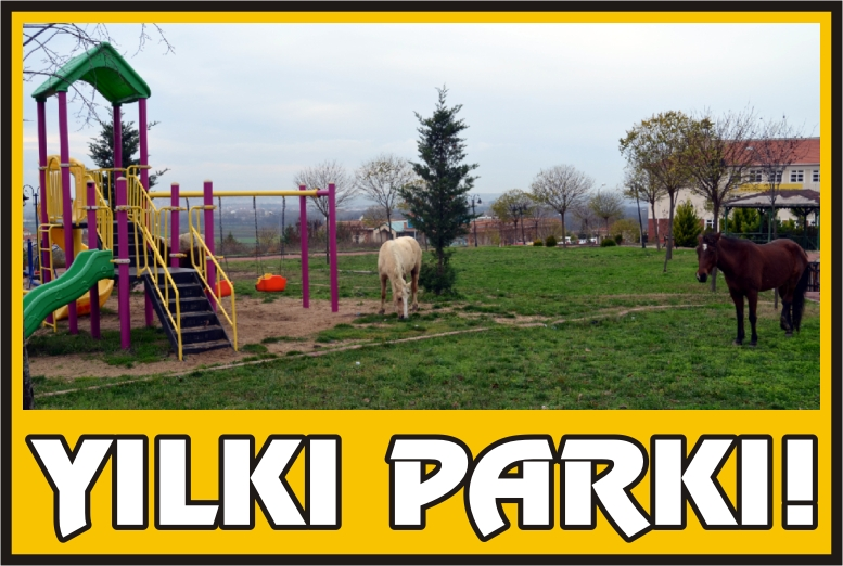 Yılkı Parkı!
